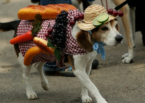 dog dressed as a picnic