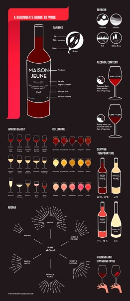 beginner's guide to wine