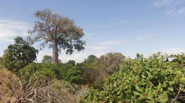 Fricciones entre forestales y conservacionistas