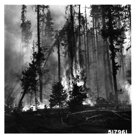 US_Forestry_06