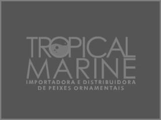 Tropical Marine Importadora: Curitiba, Brasil