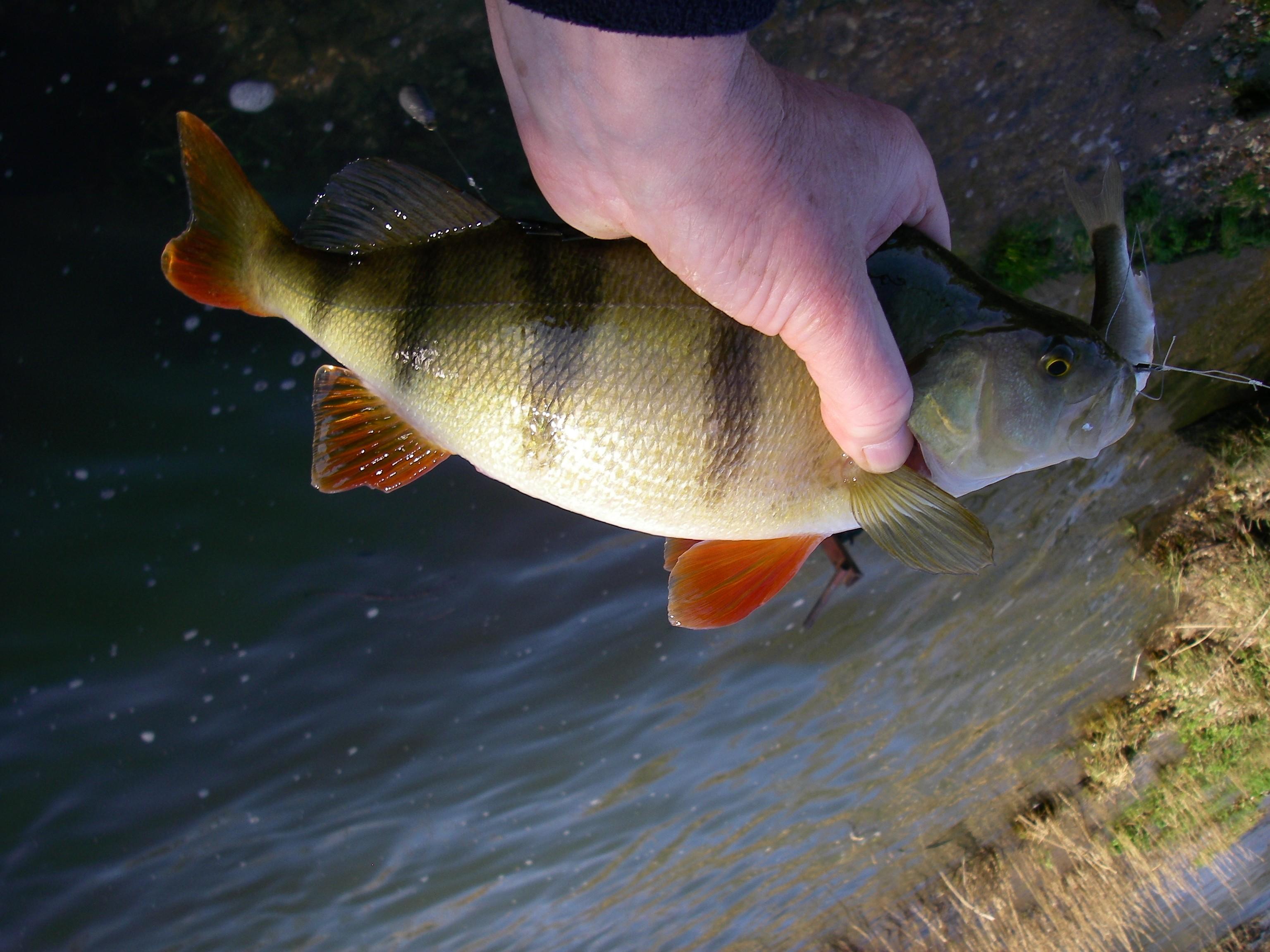 Fullsize Of How Long Do Fish Live