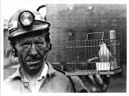 Coal Miner Canary