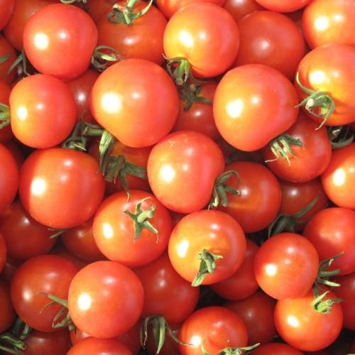 冬場のトマト