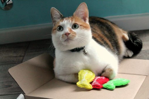 mae-and-catnip-mice