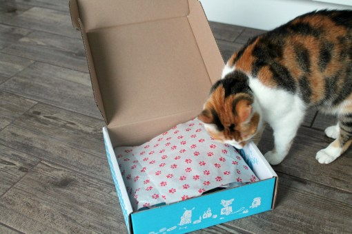 opening-purrfect-box