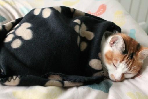 mae takes a nap