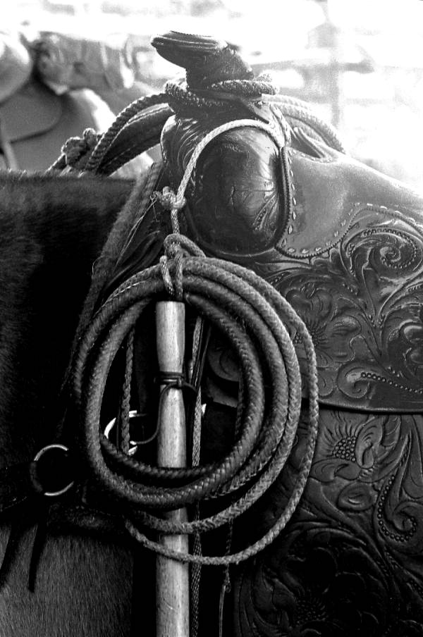Whip on the saddle of a horse at Buck Island Ranch: Lake Placid, Florida