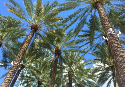 Palm Trees in Tampa - ADOS