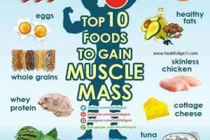 The Muscle Mass Diet You Need To Succeed