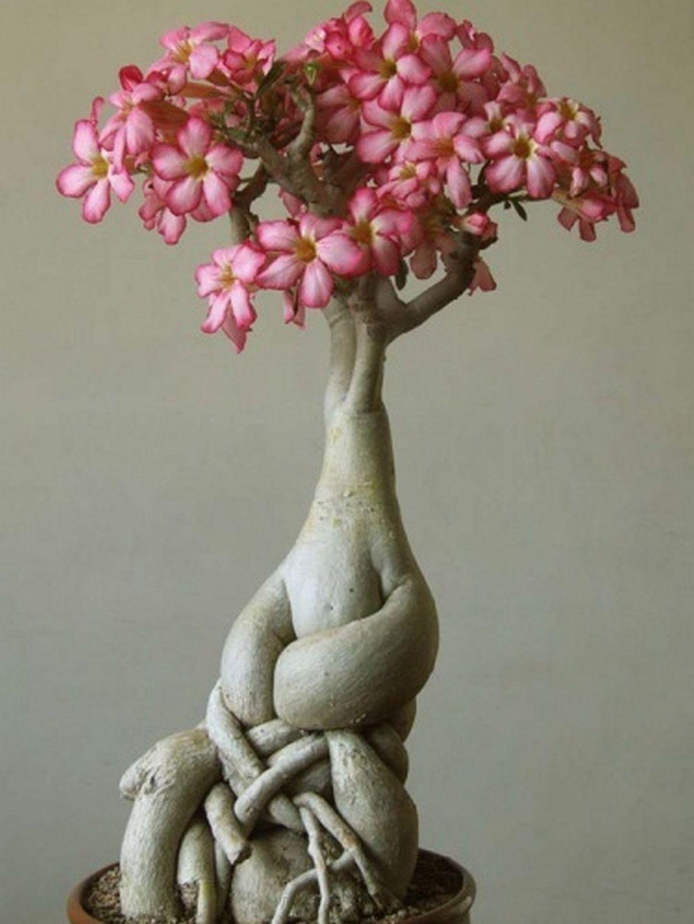 Piante grasse e succulente for Aggiunta suocera