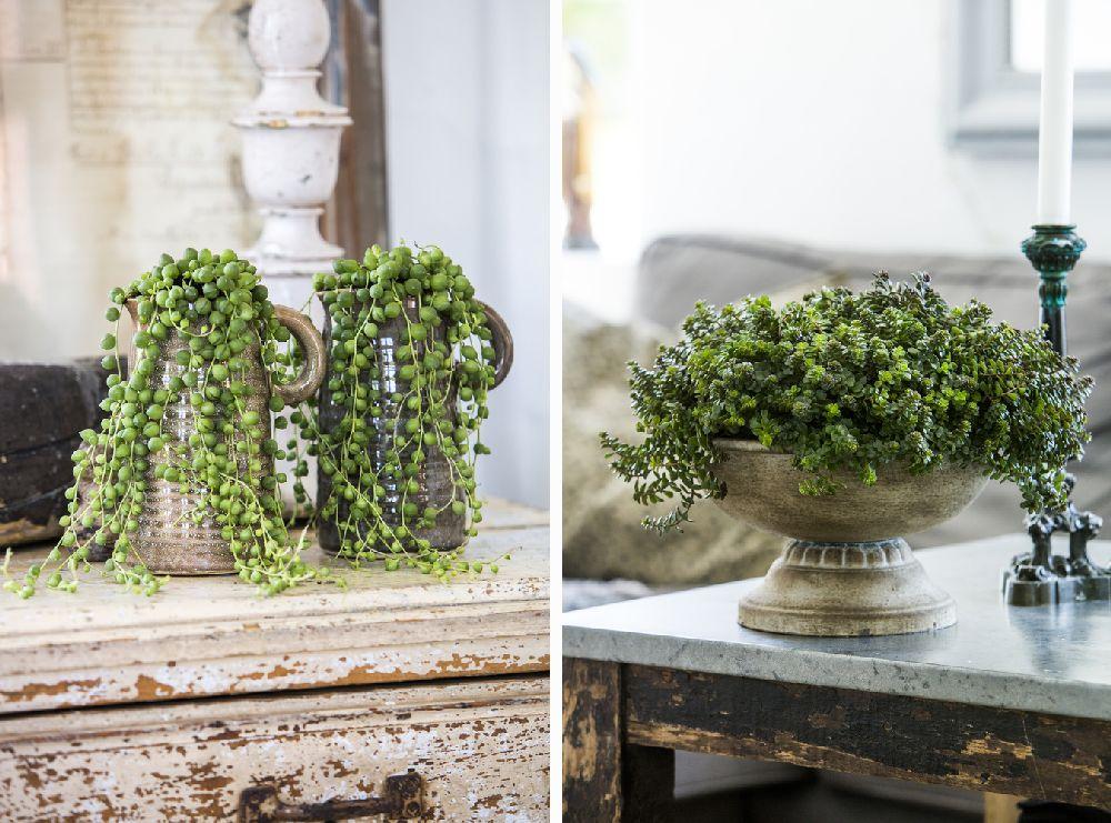 Plante la ghiveci care se ntre in u or i arat deosebit for Plante decorative exterieure