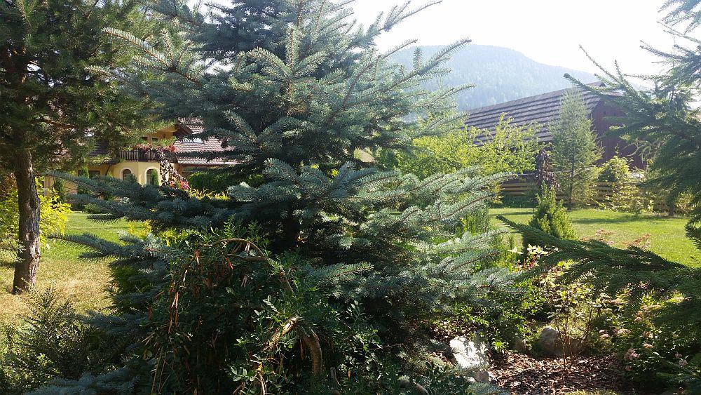 adelaparvu.com despre gradina in Bucovina, design Garden Green Campulung Moldovenesc, Foto Adela Parvu (1)