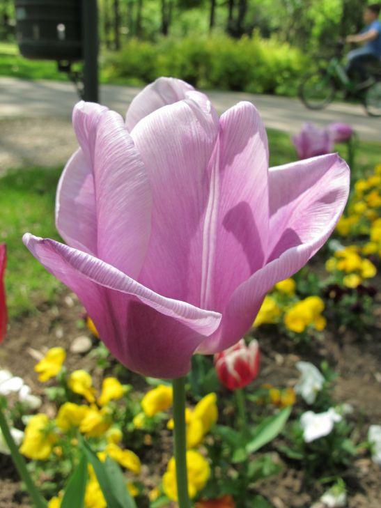 adelaparvu.com despre simbolistica florilor 6