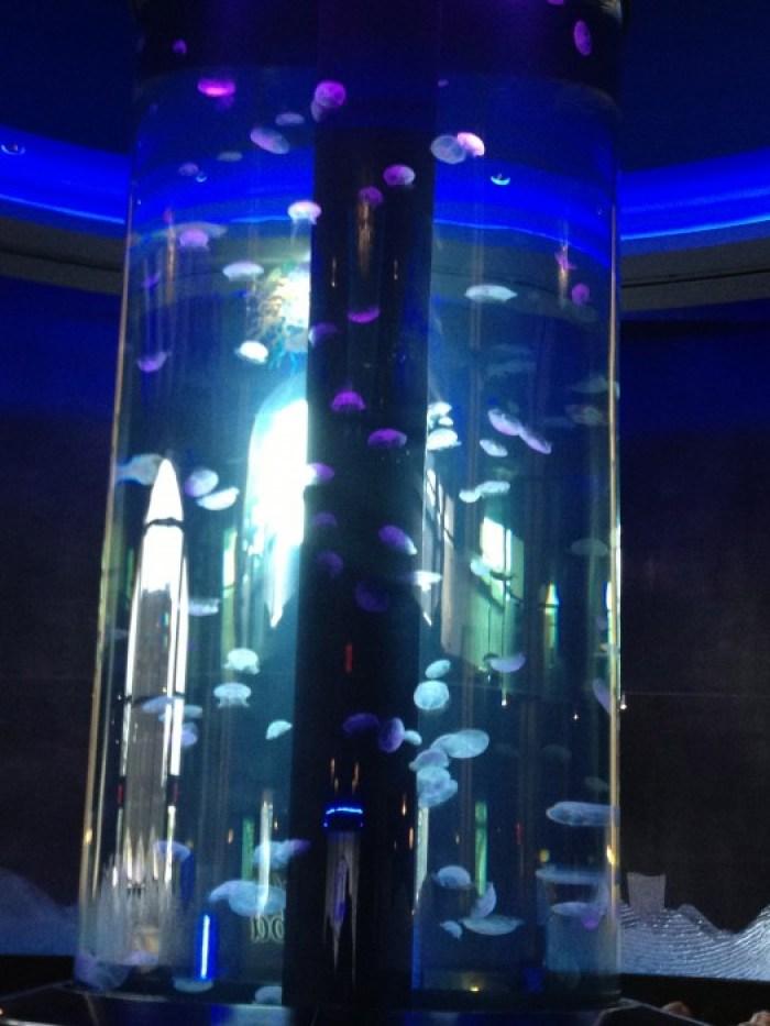 World's Largest Private Jellyfish Aquarium Coba Cocina