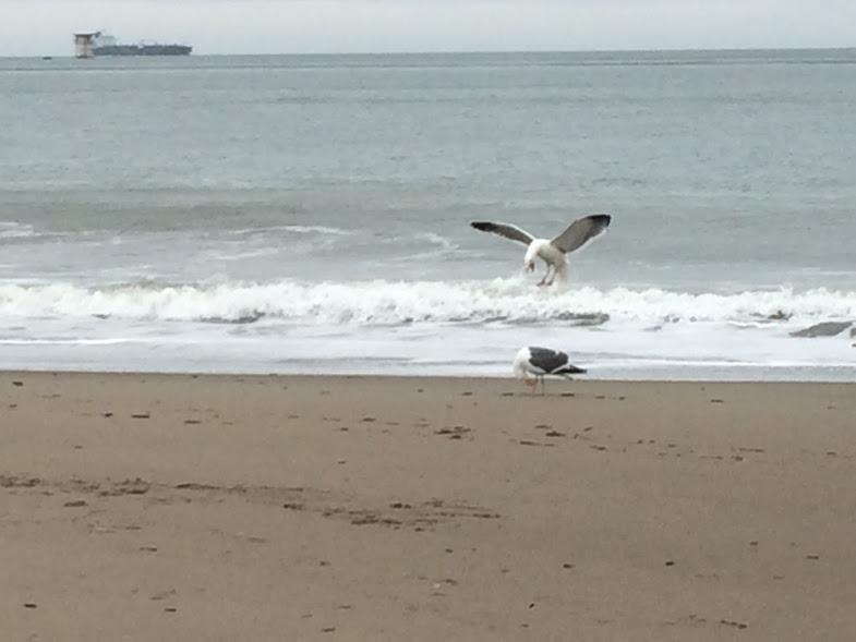 birdsbeach