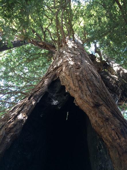 insidethetree