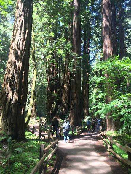 treespeople