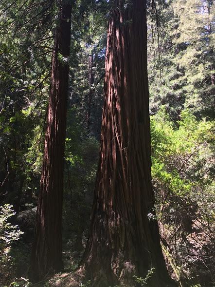 treeswoods