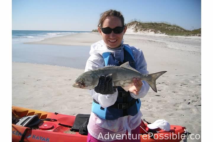 Larger bluefish