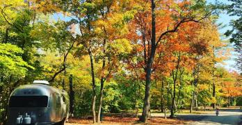 In Pursuit of Fall: The Best Fall Leaves