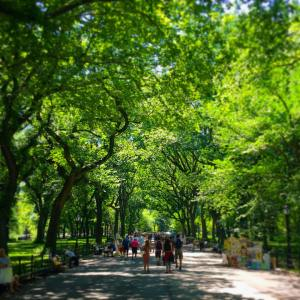 Picture perfect day in Central Park Is it any wonderhellip