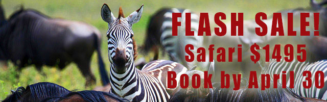 FLASH SALE!  Safari $1495 / Book by April 30