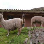 santuario_animal_ccochahuasi_cusco_turismo_peru
