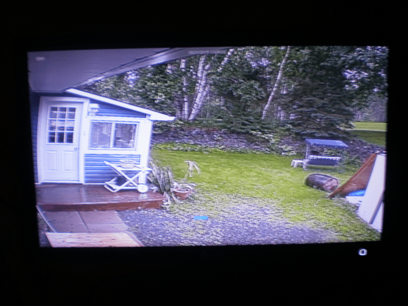 Deer Cam Video Still