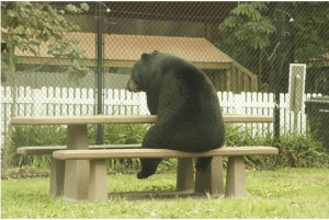 Bear sitting at a picnic table.