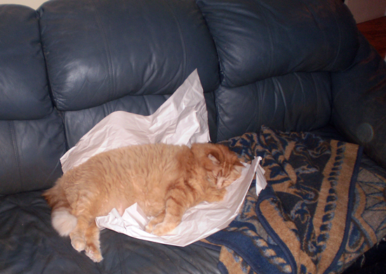 Orange Cat on a piece of paper on a couch.