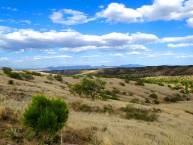 Sonora-Desert-1