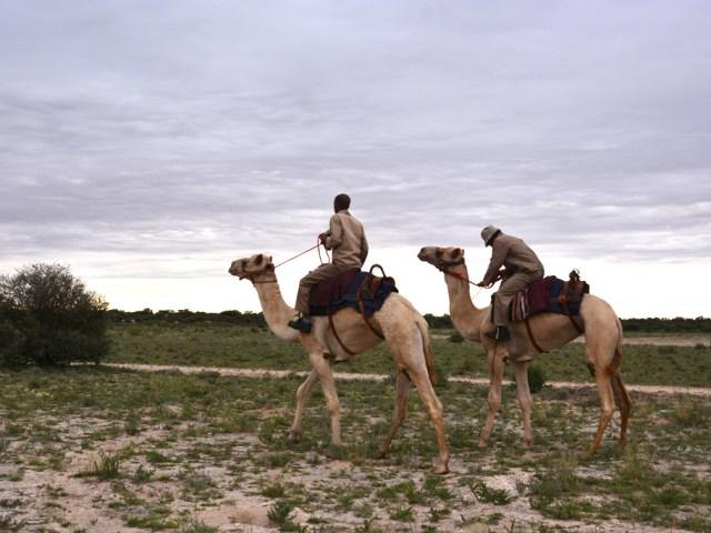 アフリカのエシカルな旅!ボツワナのコミュニティ・プロジェクトが運営する観光スポットまとめ