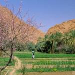 節水型農業を実現!鳥取再資源研究所、モロッコで土壌改良材を販売する現地法人を設立!