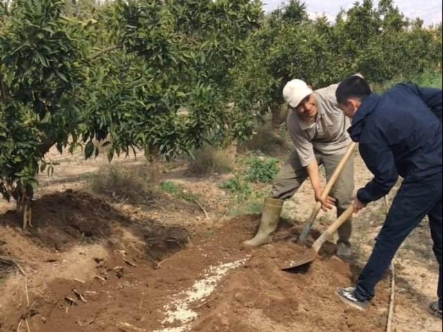 学びは現場にあり!一緒に農業をして分かった、モロッコの農家の特徴と課題!~第2回~