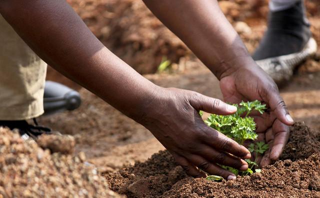 民間企業の強みを活かした課題解決へ!JICA、SDGsビジネス調査でアフリカ地域を2件採択!