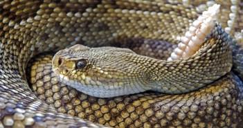 snake-751722