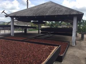 cocoa ghana1