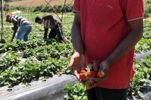 Land farming Africa