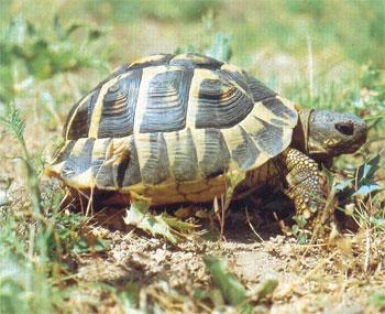 Les agents de la garde nationale de Barraket Essahel ont saisi un camion transportant illégalement 270 tortues vers un pays voisin