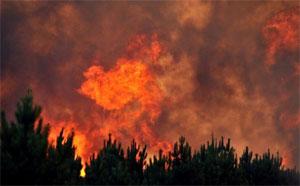 Un immense incendie s'est déclenché dans la localité de Fej Errih au gouvernorat de Bizerte
