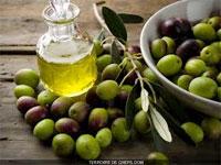La production de l'huile d'olive