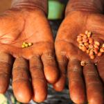 Precious seeds