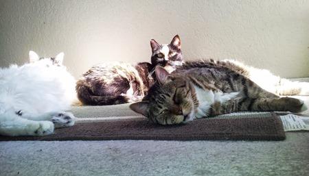 kitties_sunning
