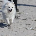 1. oktober betyder, at hunden må løbe løs på stranden