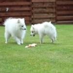 Del 2: Få så styr på de hanhunde!!!