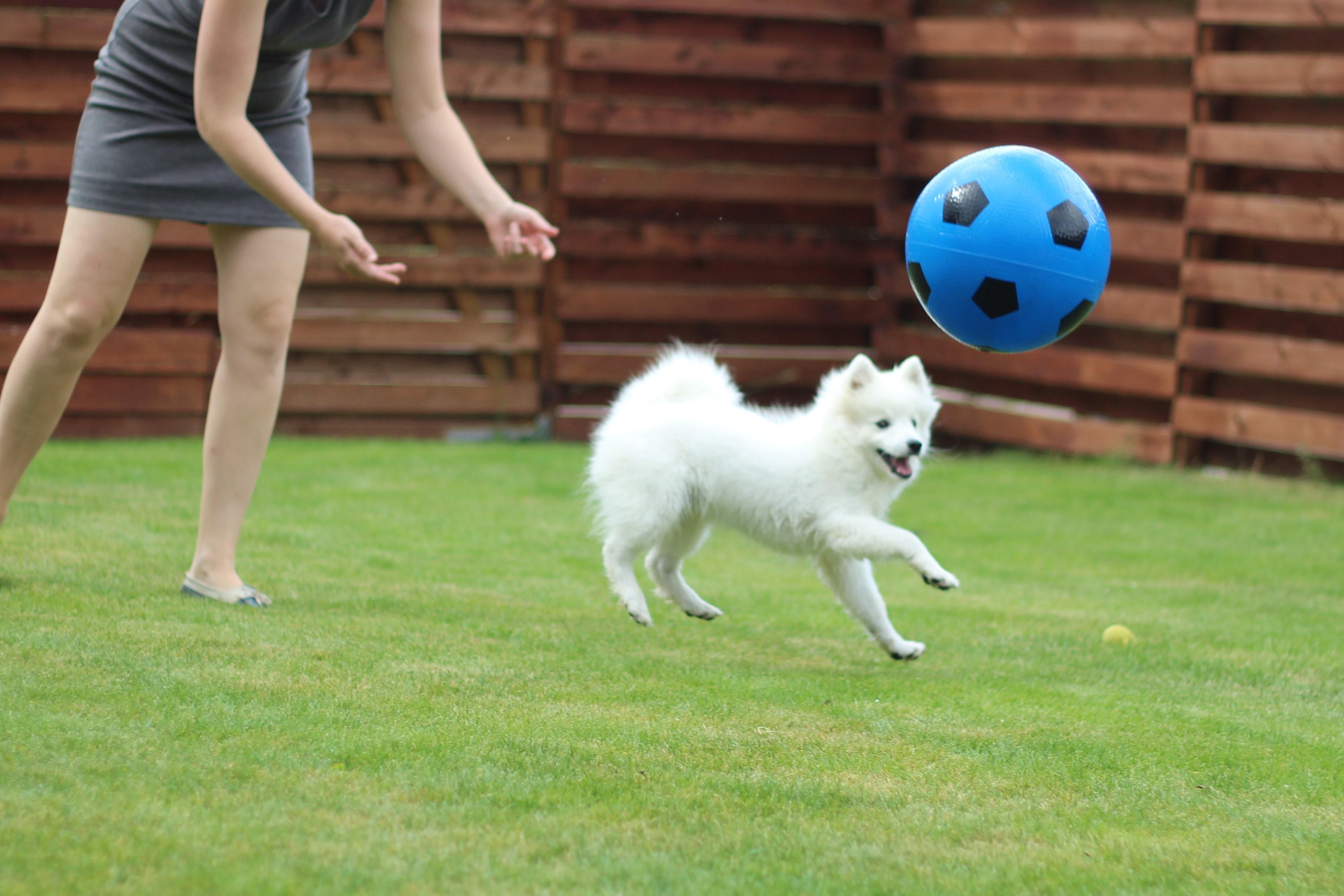 Der er altså bolden, og ikke hunden, jeg kaster her!