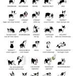 Adfærd, sanser og kropssprog – Del 2 – Kropssprog