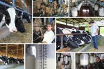 Dairy farm, collage