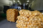 Bagged potatoes, prepared for transport and sale-trade Chicago Tribune